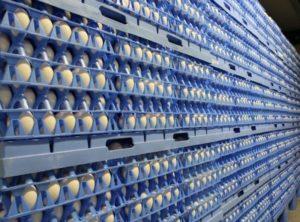 Хранение яиц на производстве
