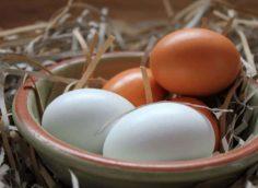 Хранение яиц при комнатной температуре