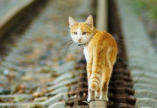 Провоз кошки на 66 поезде до киева