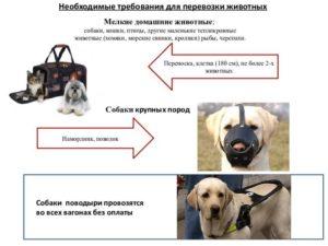 Основные требования для провоза животных