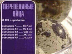 Состав яиц перепелки