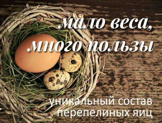 Перепелиные яйца - полезные и опасные свойства перепелиных яиц