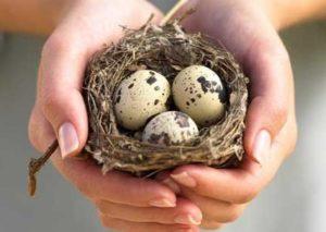 Проверка яиц перепелки