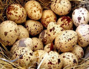 Яйца перепелки