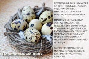 Польза яиц перепелки