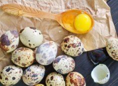 Правила хранения яиц перепелки