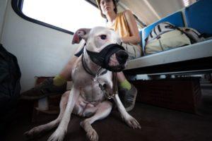 Провоз собаки в скоростных поездах