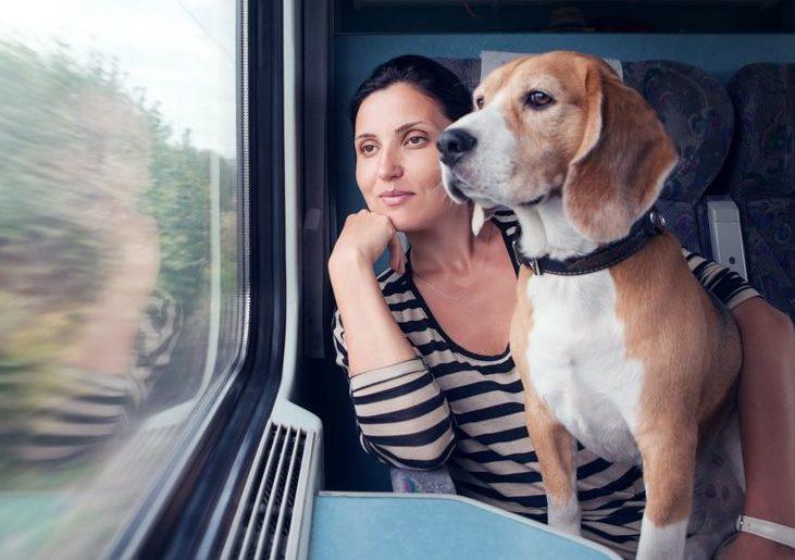 Можно провезти собаку в 102 поезде москва сочи