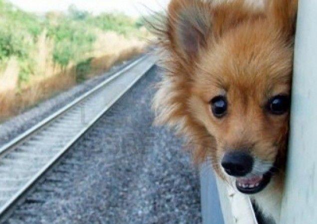 Перевозка домашних животных в поезде РЖД Правила перевозки животных в поезде РЖД