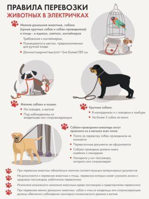 Правила перевозки животных в электричках