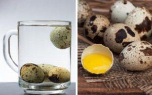 Проверки свежести в воде яйца перепелки