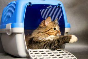 Провоз кошки в клетке