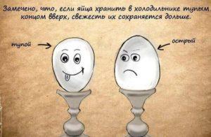 Хранение яиц острым концом вниз