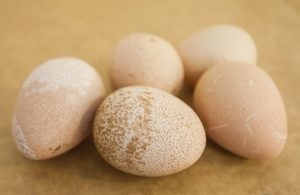 Цесарское яйцо