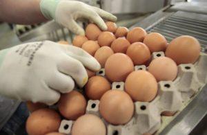 Перебор яиц на складе