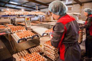 Складское хранение яиц