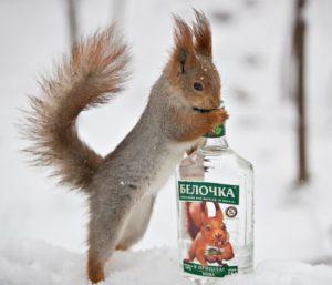Животные в рекламе спиртного