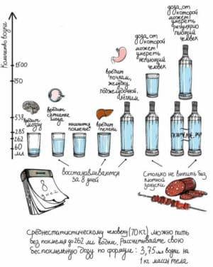 Влияние алкоголя на организм человека в зависимости от количества выпитого спиртного